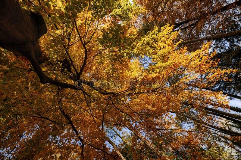 Sotto l'albero giallo fotografia stock libera da diritti