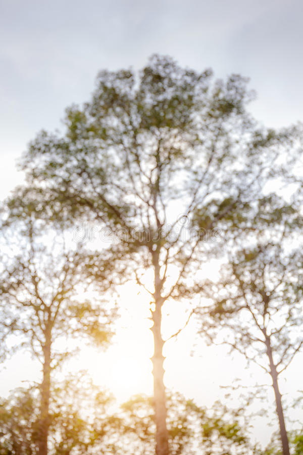 Sottragga la foto vaga di fogliame verde in parco pubblico e in sunli fotografia stock
