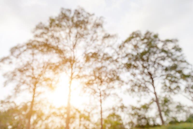 Sottragga la foto vaga di fogliame verde in parco pubblico e in sunli fotografia stock libera da diritti