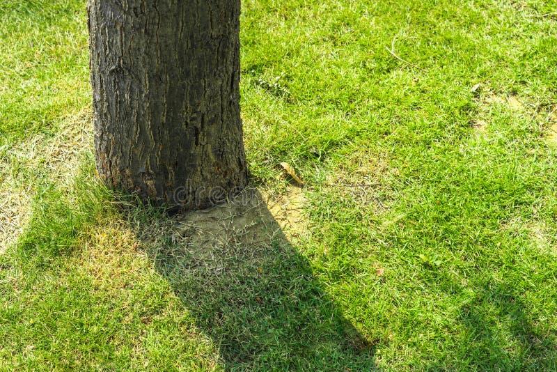 Souche d'arbre photo stock