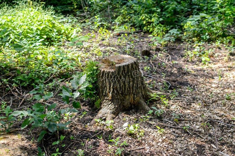 Souche d'arbre en parc public photos stock
