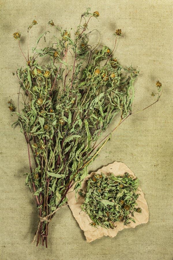 Souci de bureau Herbes sèches Phytothérapie, medicin phytotherapy photo libre de droits