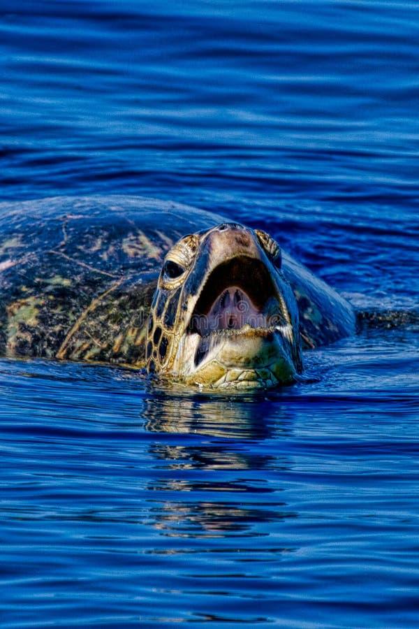 Souffle de tortue photographie stock