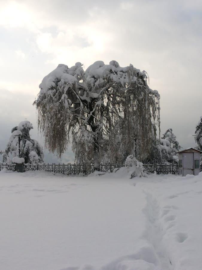 Souffleuses de neige photos libres de droits