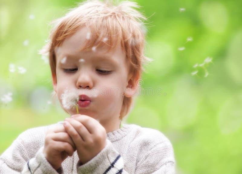 Souhaits de soufflement de jeune garçon sur la graine de pissenlit photo libre de droits
