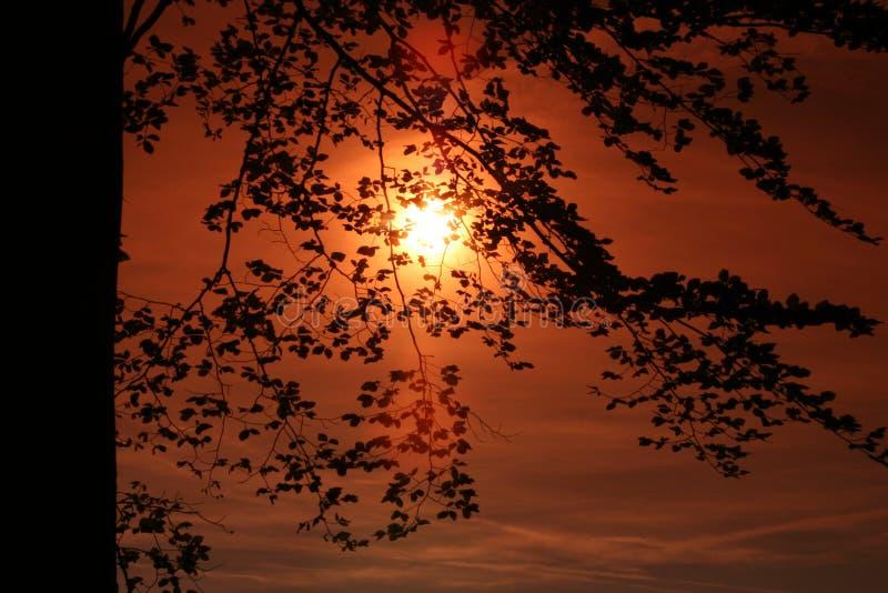 Soulèvement Sun derrière les arbres image stock