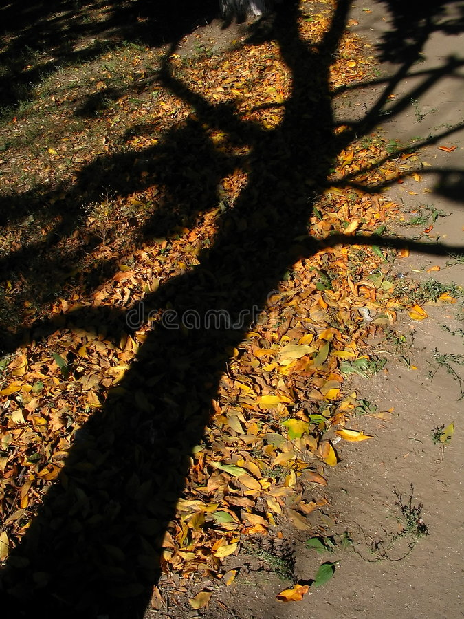 Download Soul Of The Tree Royalty Free Stock Photo - Image: 1418095