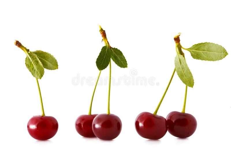 Sour cherries royalty free stock photo