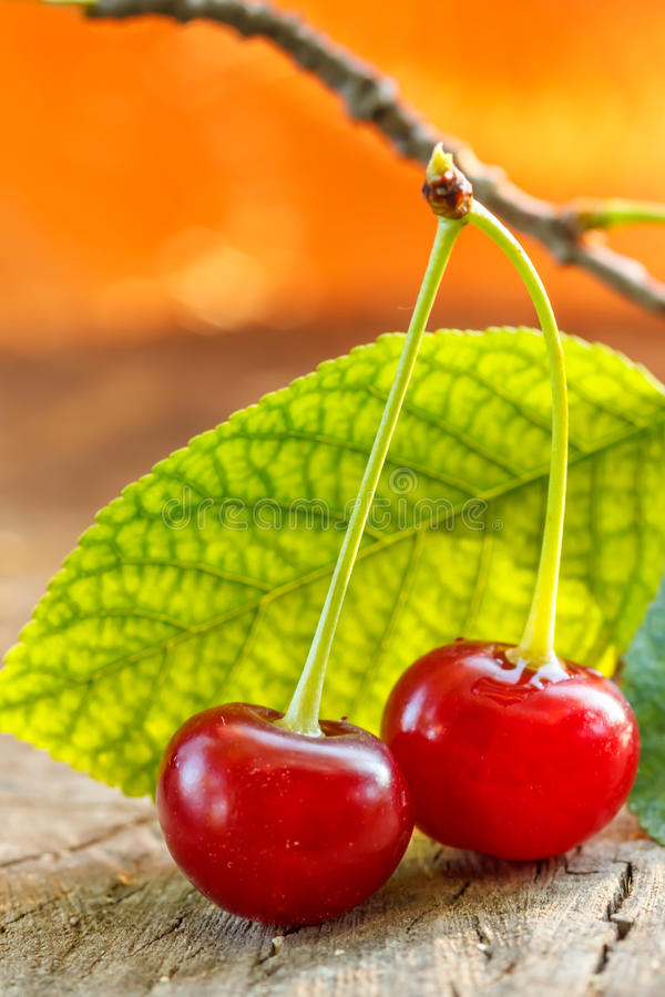 Download Sour cherries stock photo. Image of ripe, fruit, health - 25515254