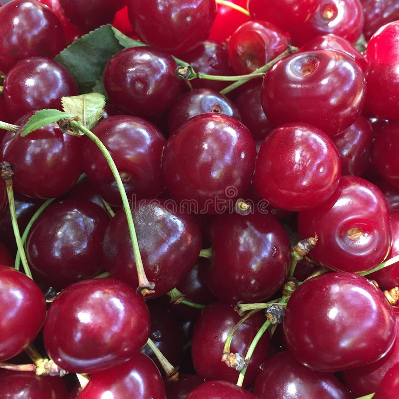 Sour cherries royalty free stock image