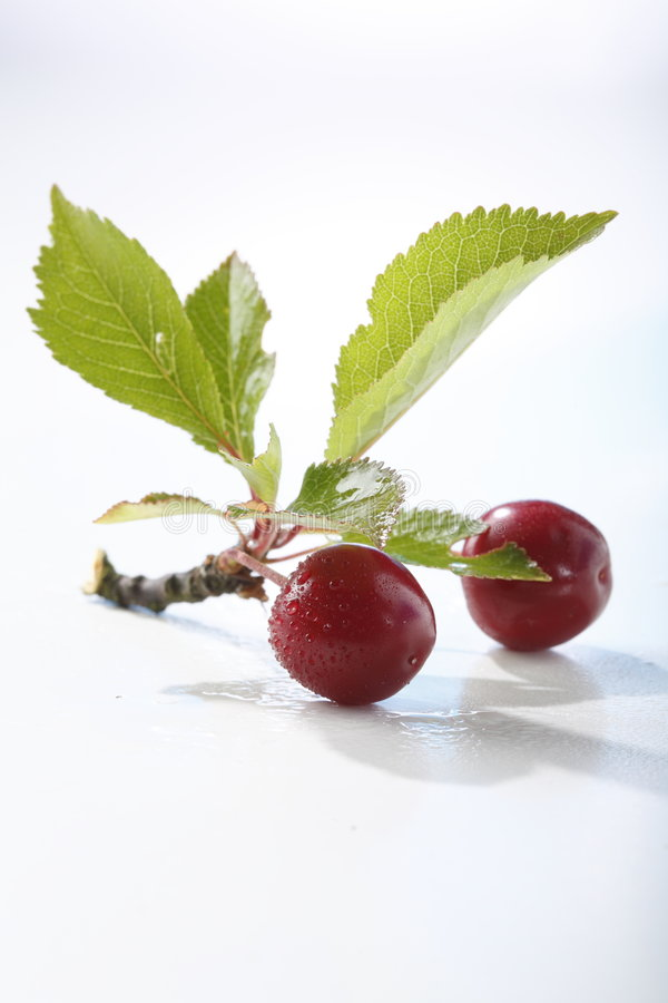 Free Sour Cherry Royalty Free Stock Images - 5523309