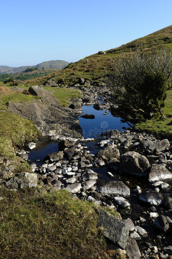 Download Sour Milk Gill Royalty Free Stock Image - Image: 22075576