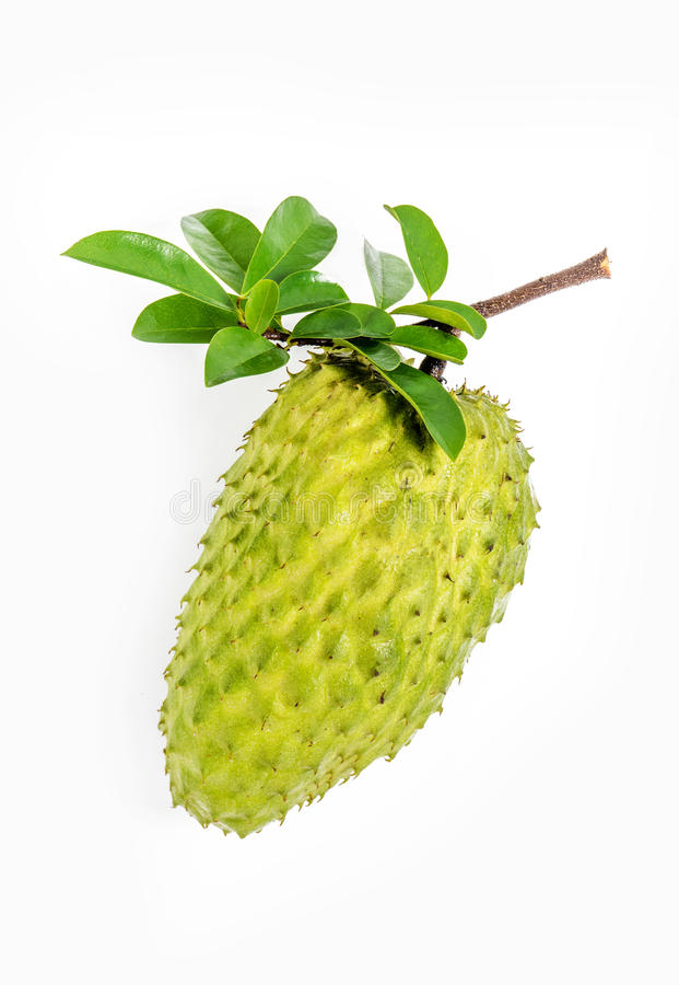 Sour sop, Graviola, Guyabano, Prickly Custard Apple stock photography