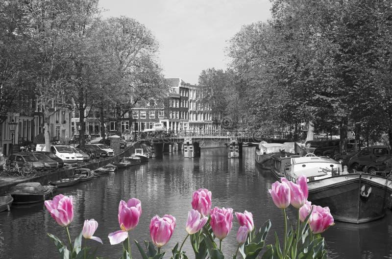 Source à Amsterdam photo stock