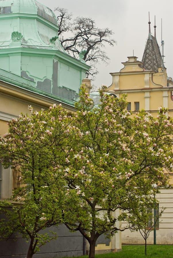 Source à Prague Czechia Arbre de floraison de beau ressort image stock