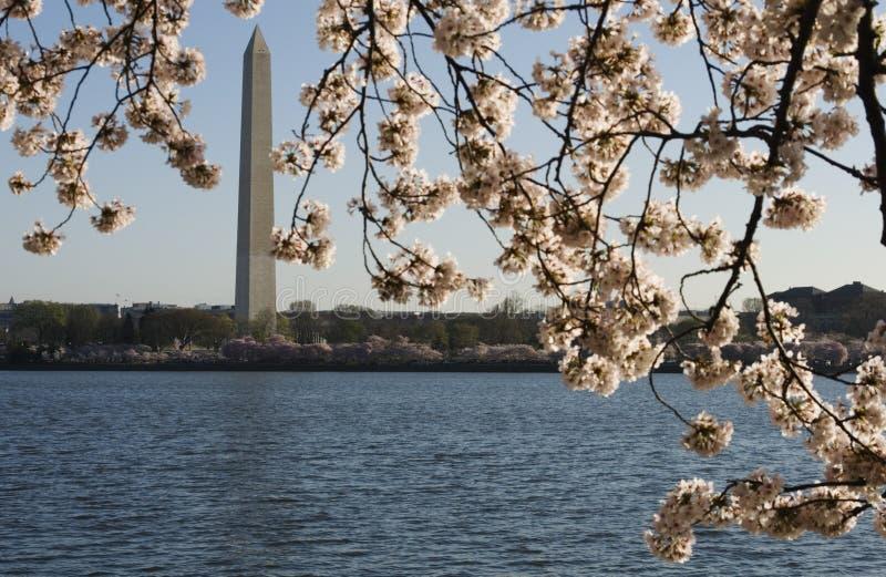 Source à Washington photographie stock