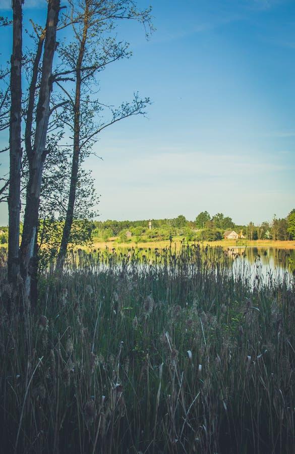 Source cachée dans la forêt photos libres de droits