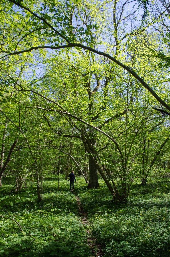 Source dans la forêt à feuilles caduques photo stock