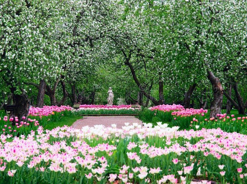 Source dans le jardin de pomme photos stock