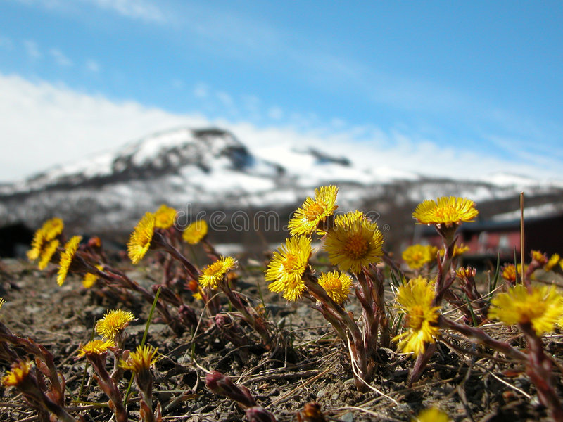 Source dans Oppdal photographie stock