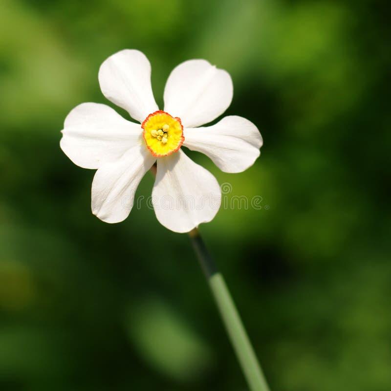 source de fleur photographie stock libre de droits