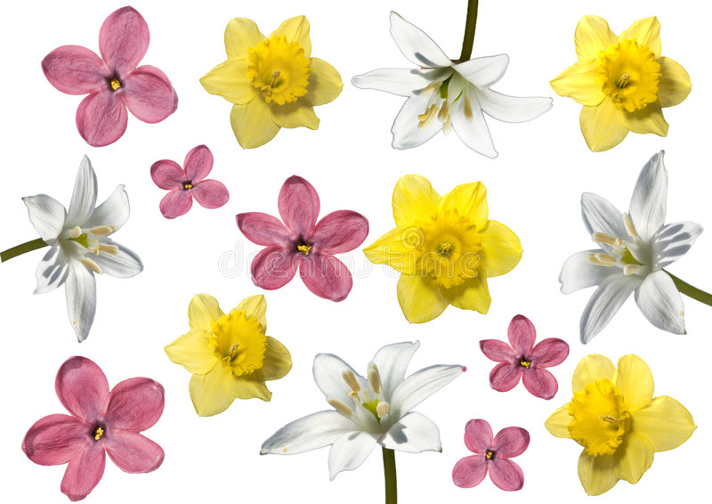 source de fleurs images stock