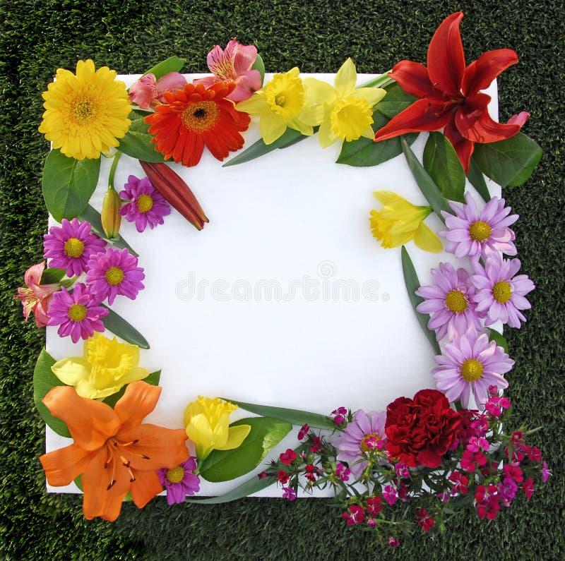 source de trame de fleur images stock