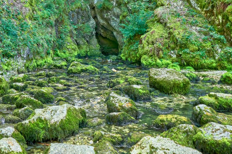 Source du Doubs Mouthe Franche Comté France with Green Plants. On A Sunny Day royalty free stock image