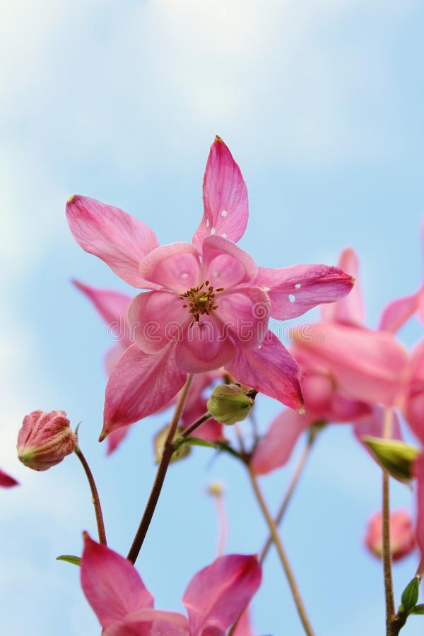 Source en fleur photo stock