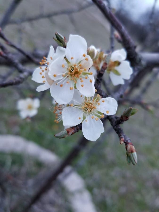 Source en fleur photos stock
