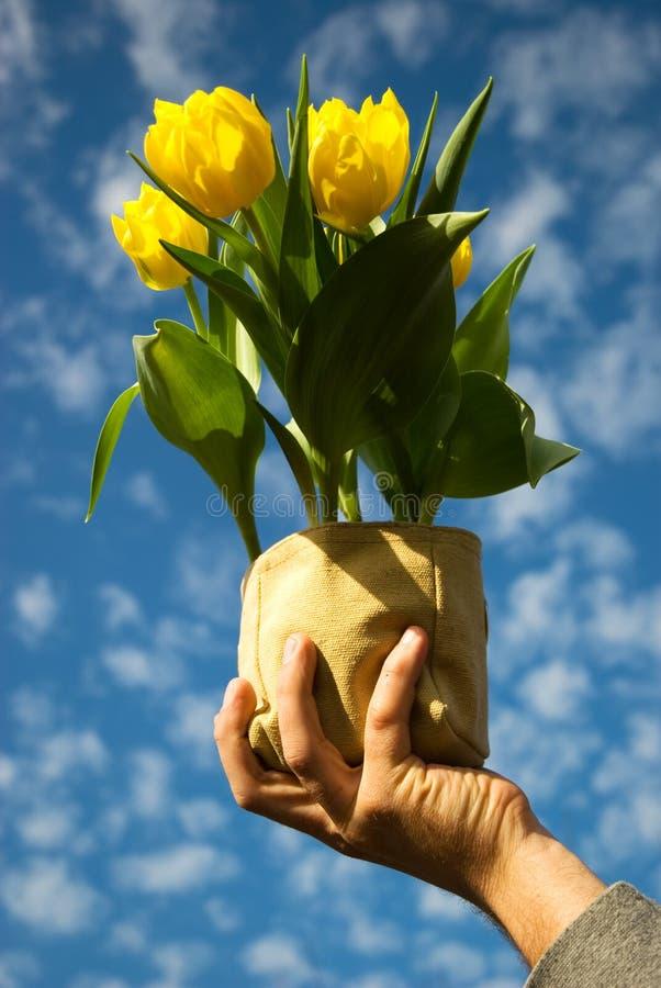Download Source heureuse image stock. Image du tulipes, haut, ressort - 8660623
