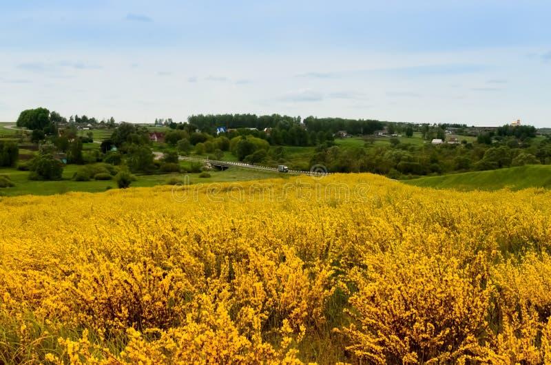 Source jaune photo stock
