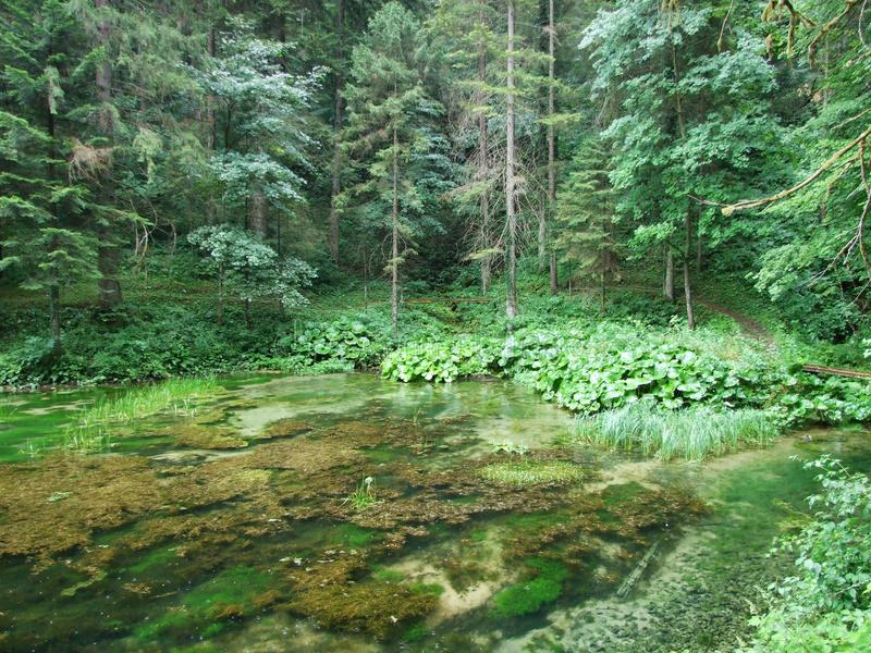 Source of the mountain river. In the forest stock image