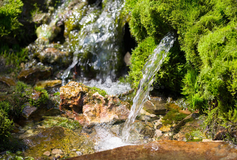 Source of spring water. In the forest royalty free stock photo