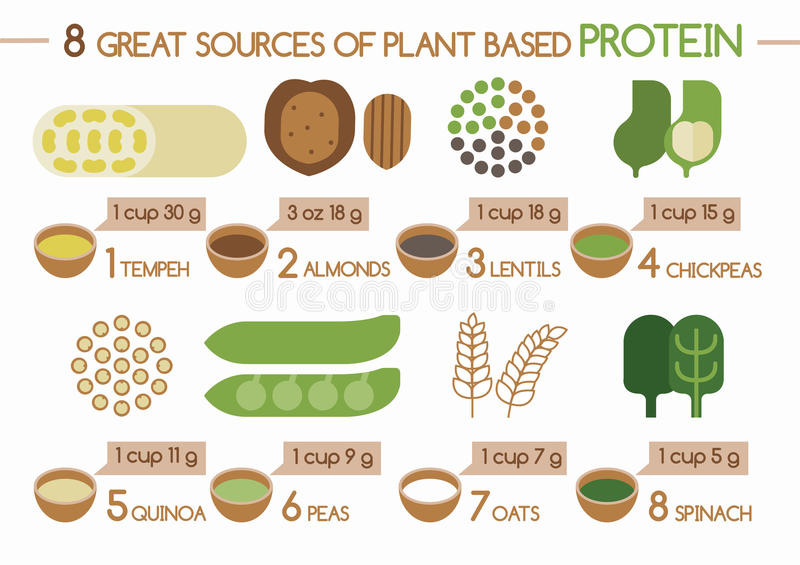 8 sources of plant based protein Illustrator vector illustration