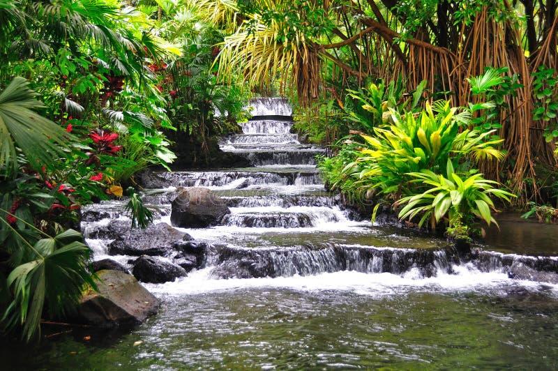 Sources thermales de Tabacon, Costa Rica images libres de droits