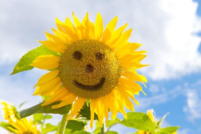 Sourire de tournesols photographie stock libre de droits