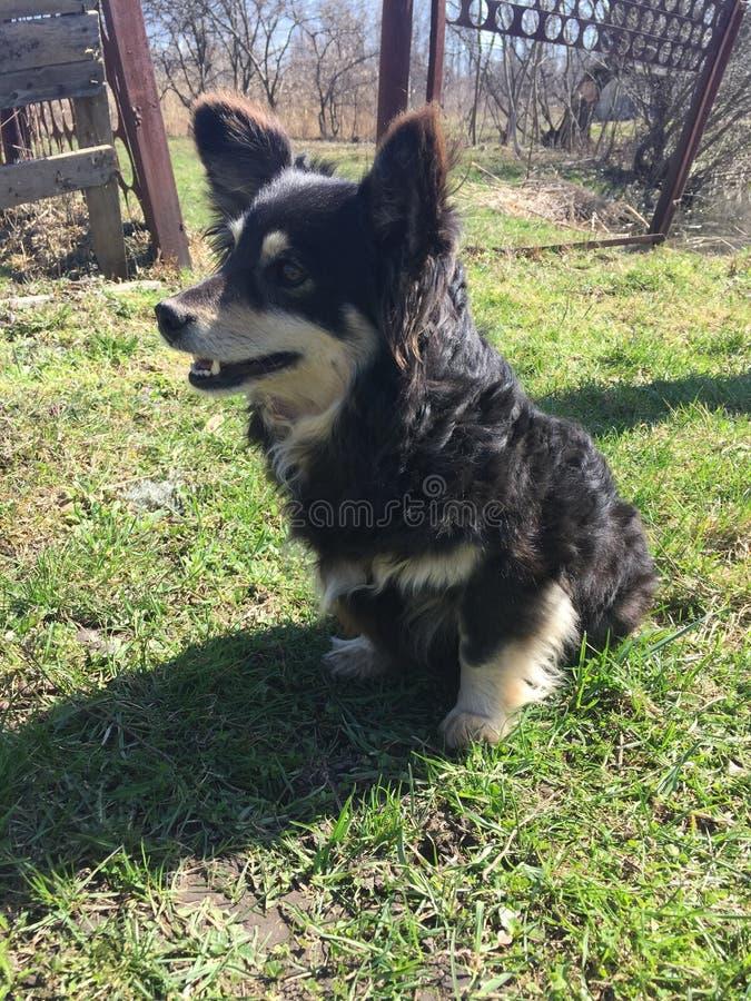 Sourire extérieur de chien noir photographie stock libre de droits