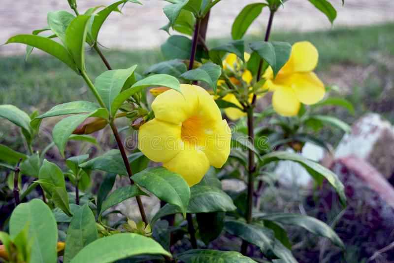 Sourire jaune image stock