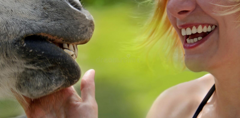 Sourires de fille et de cheval heureux photographie stock libre de droits