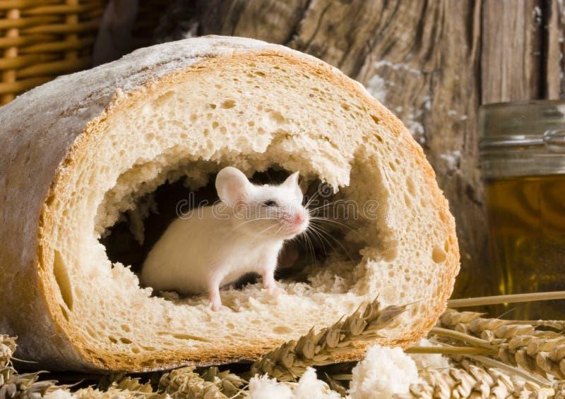 Souris dans un pain images libres de droits