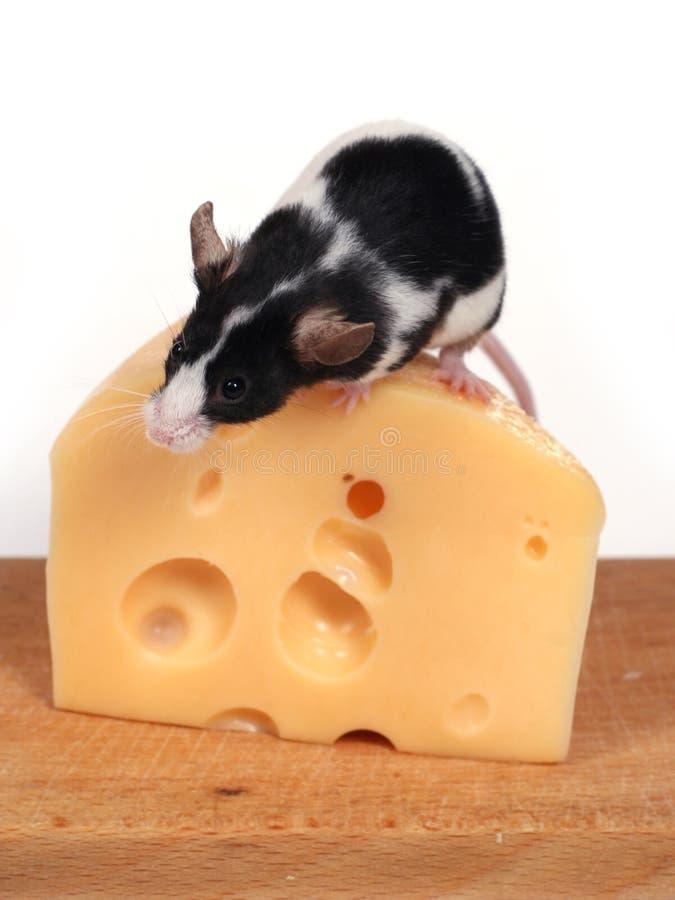 Souris et fromage photos stock
