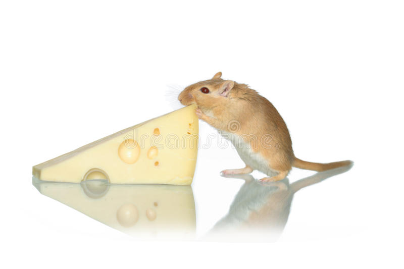 Souris et fromage photographie stock