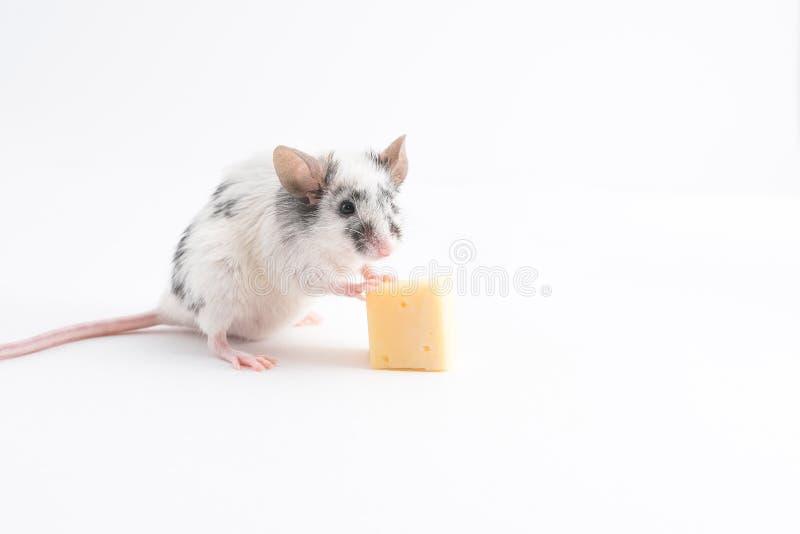 Souris mignonne décorative tenant des jambes de fromage, sur un fond clair photo libre de droits