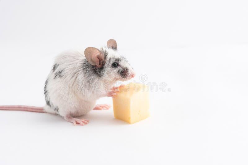 Souris mignonne décorative tenant des jambes de fromage, sur un fond clair image libre de droits