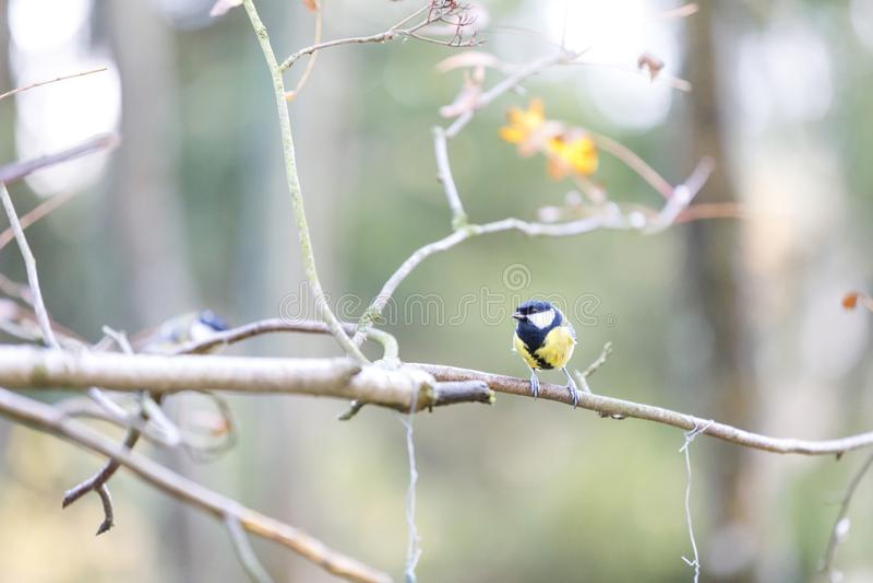 Souris sur une branche d'arbre dans la forêt images stock