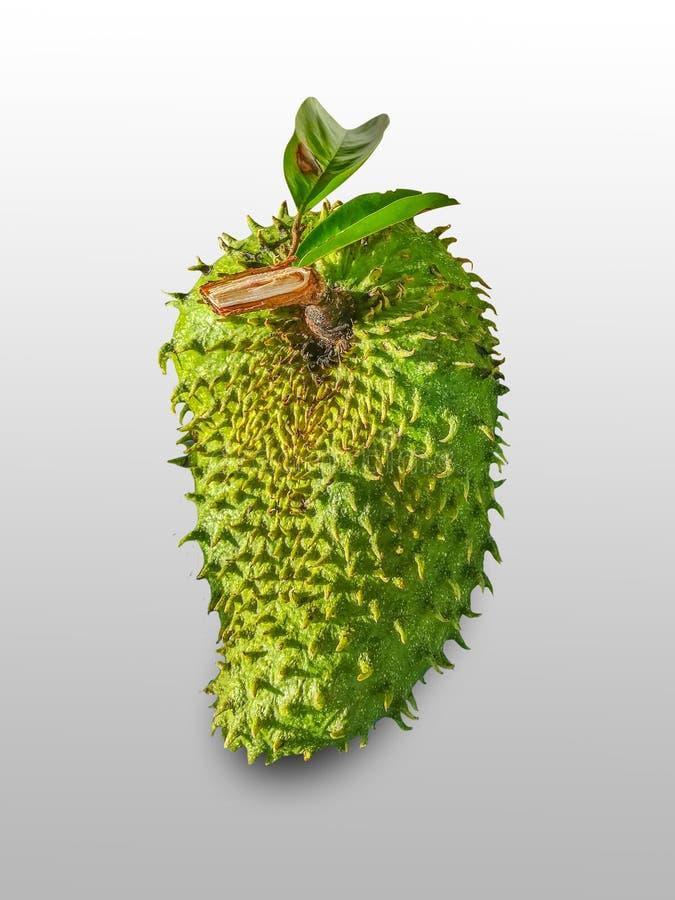 Soursop äpple för taggig vaniljsås royaltyfria bilder