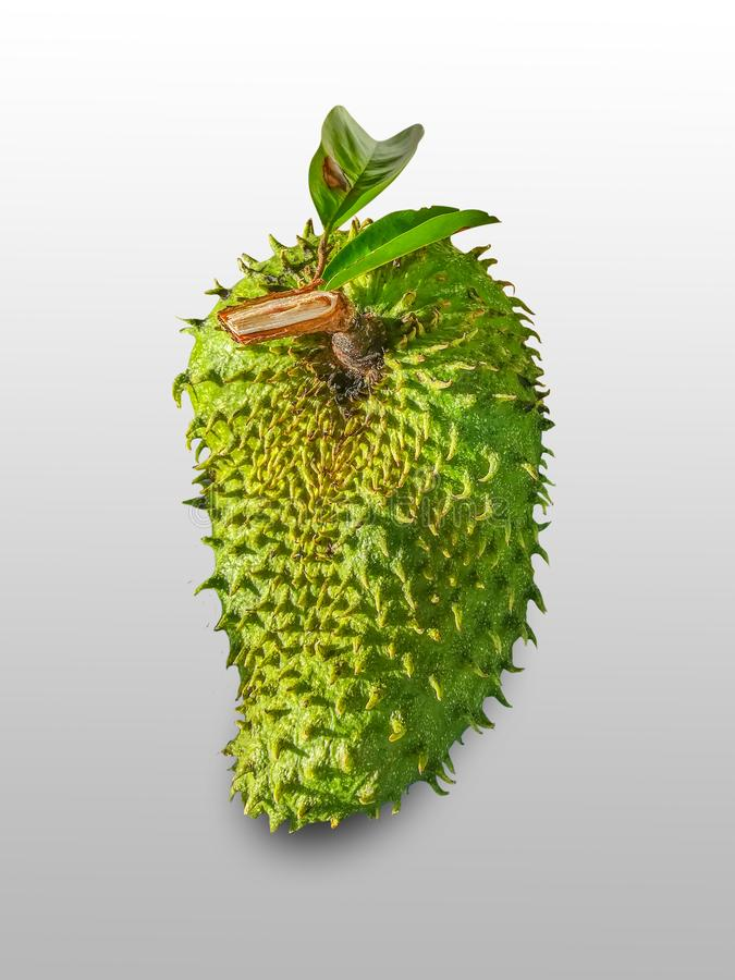 Soursop, Prickly Custard Apple royalty free stock images