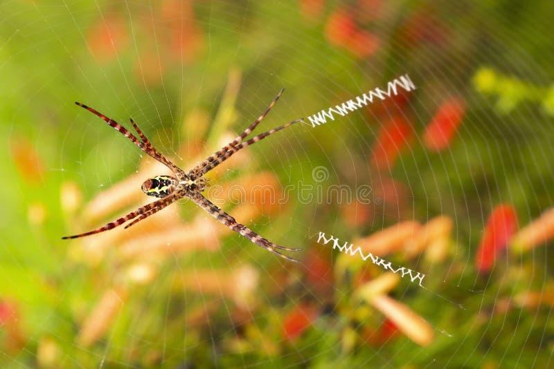 Sous l'araignée de vue l'épousez dessus image stock