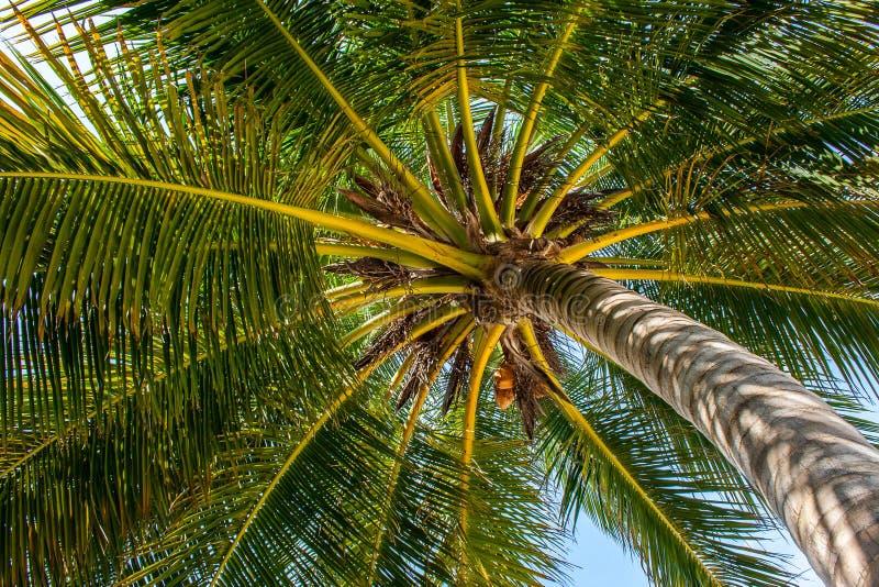 Sous l'arbre de noix de coco image stock
